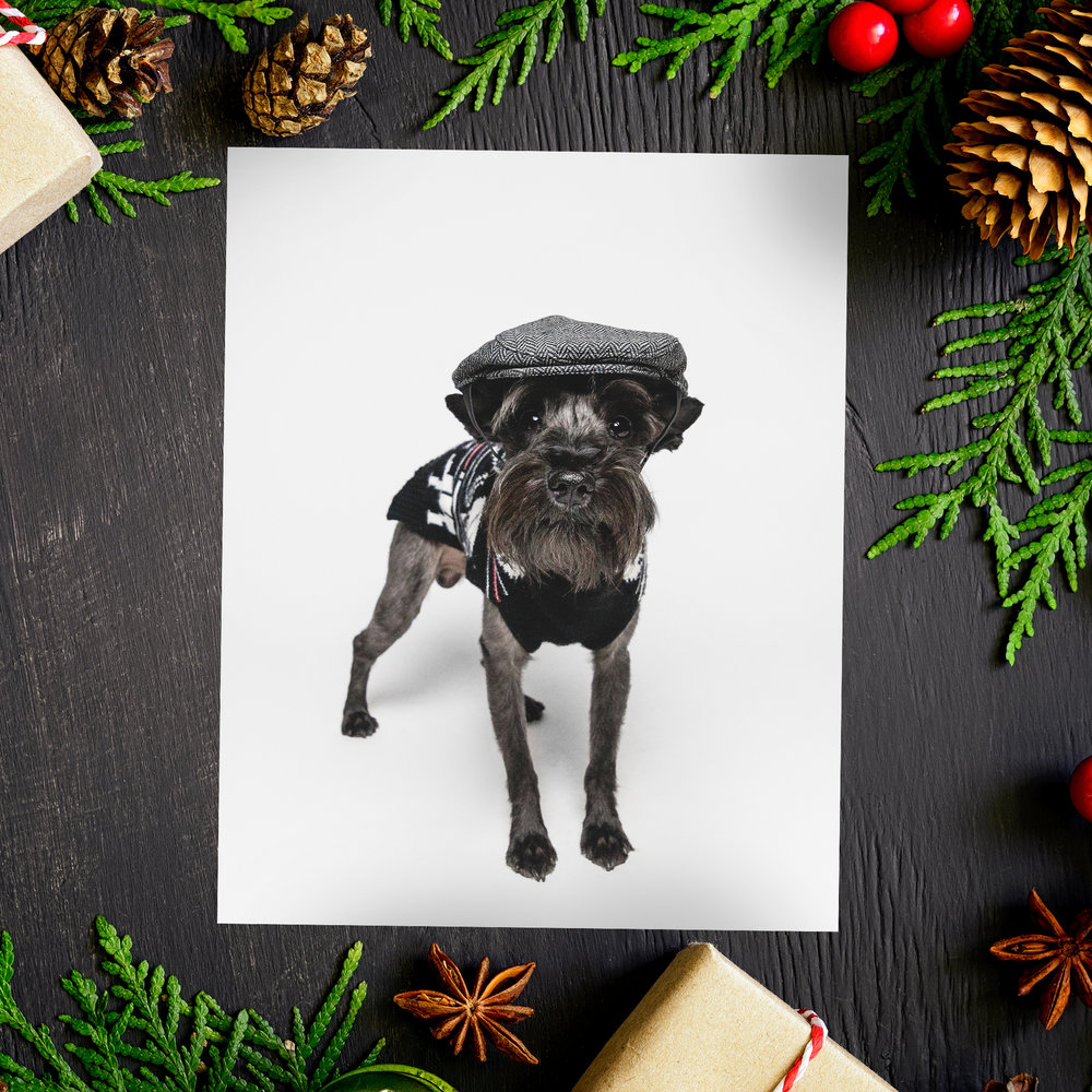Holiday Mini Session, AMSTAPHY Pet Photography