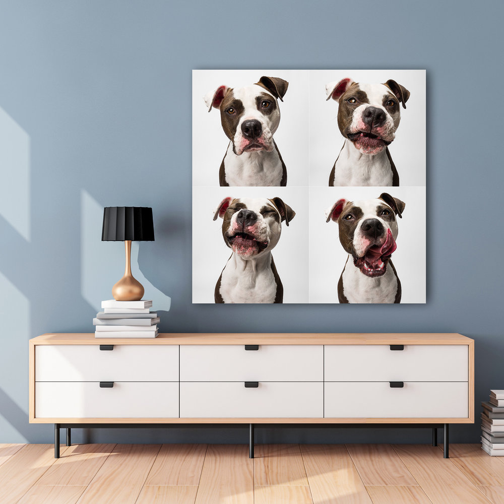 Dog wall portrait, AMSTAPHY Pet Photography