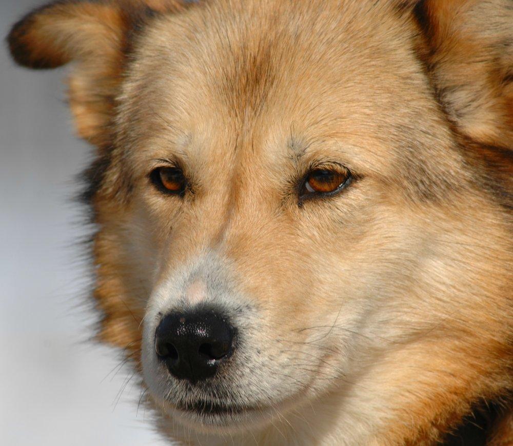 Foxi -