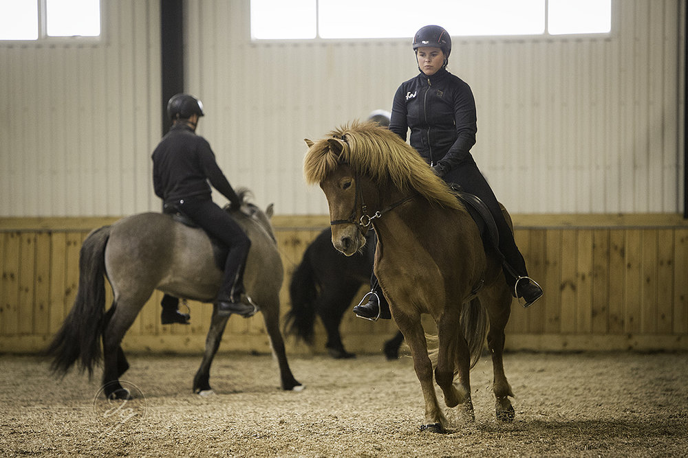 A demonstration of training the young horses at Fet.