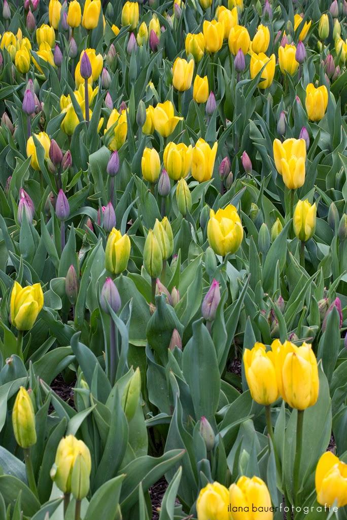 Spring_0006_3.jpg