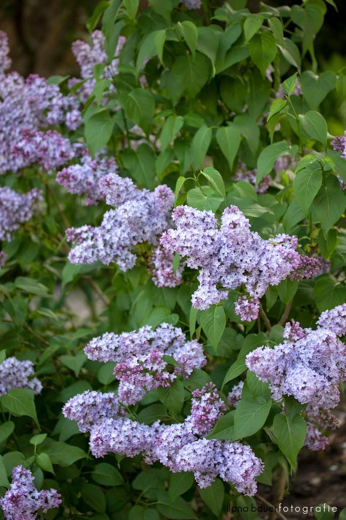 Spring_0008_5.jpg