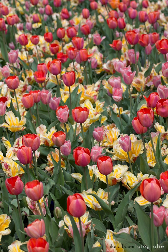 Spring_0004_1.jpg