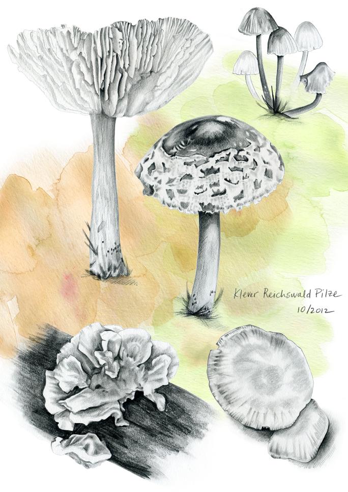 Pilze+Drawings.jpg