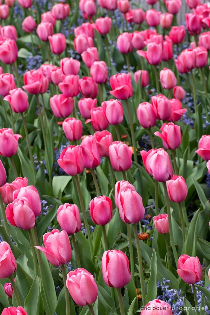 Spring_0005_2.jpg