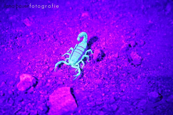 Scorpions 005.jpg
