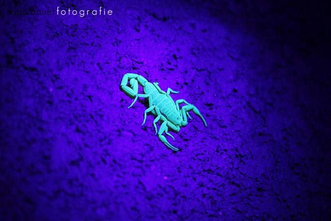 Scorpions 006.jpg