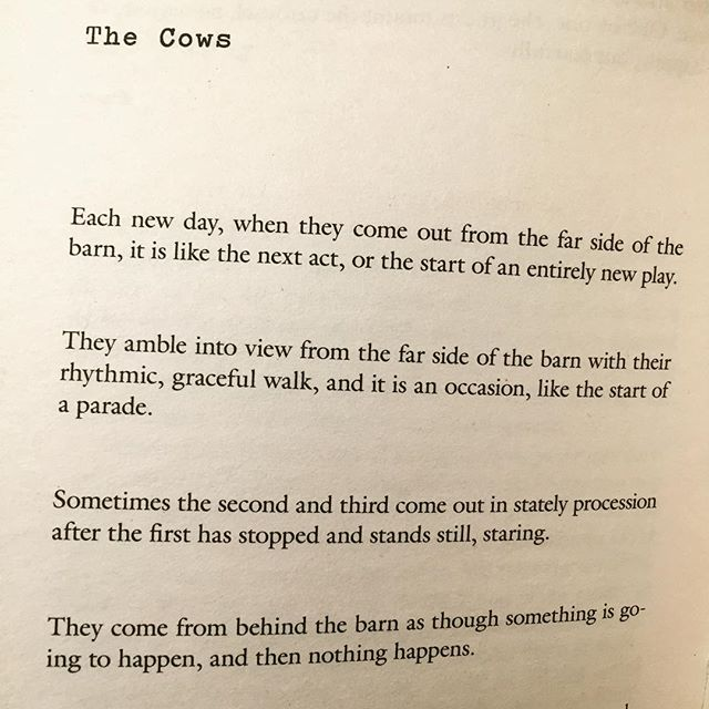 The Cows by Lydia Davis.  Relaxing nighttime reading.  And inspiration for a piece I am going to make.  I love making things.
