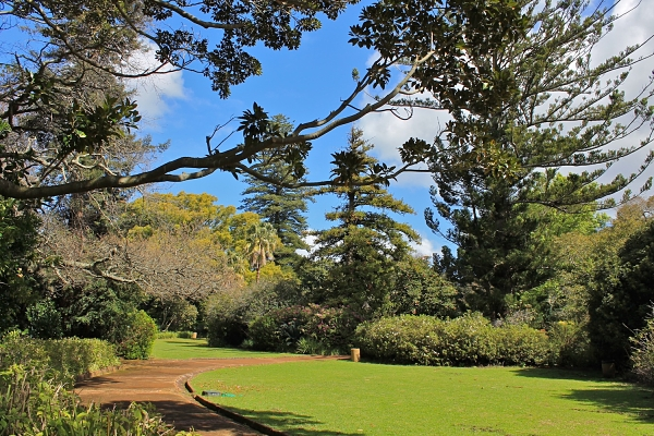 Arderne Gardens, Claremont, Cape Town by Marie Frei