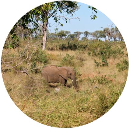 elephantinkrugerbymariefrei.jpg