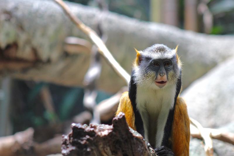 bronx zoo monkey 2 onecarryon.jpg