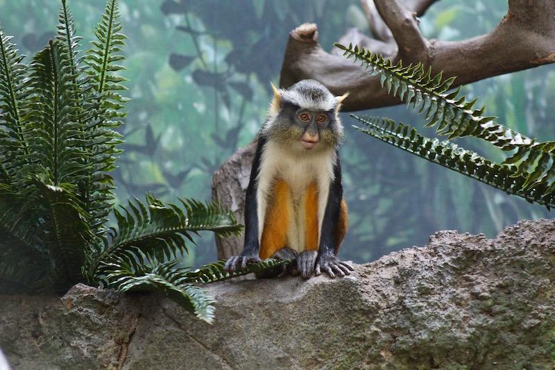 Nyiswild Bronx Zoo