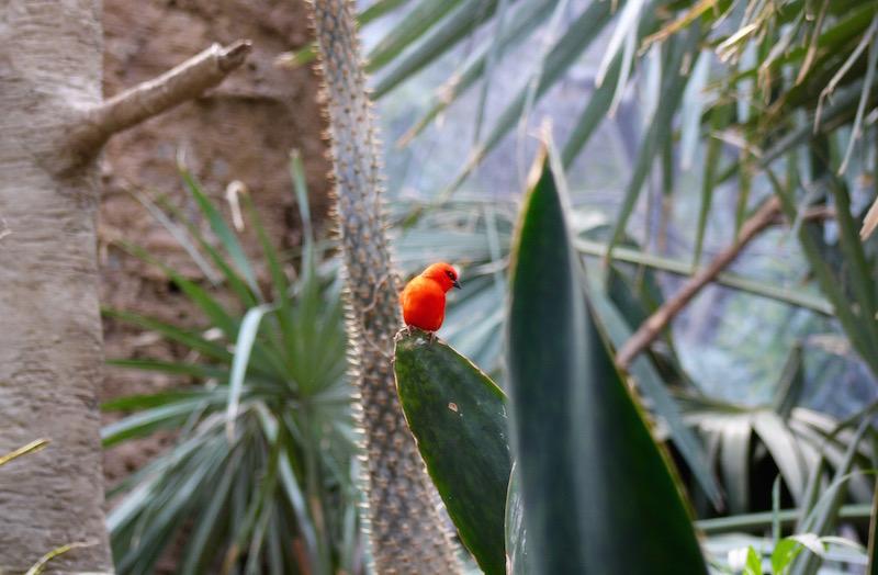 bronx zoo red bird onecarryon.jpg