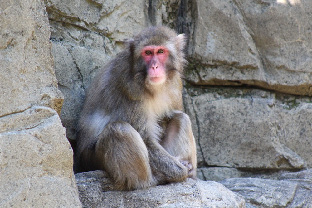 monkey central park zoo.jpg