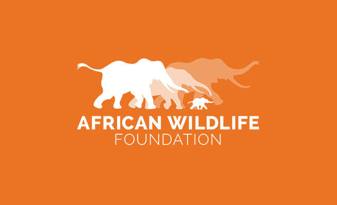 Blog Contributor,  AFrican Wildlife Foundation