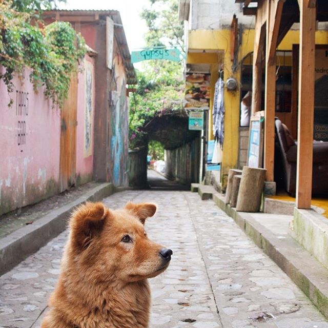 Each of the villages surrounding Lake Atitlán felt unique, though, there was one thing I couldn't help but notice they all share in common 🐾 #dogsoflakeatitlan