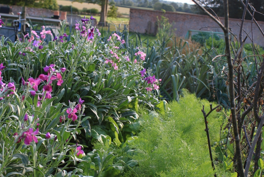 Our walled garden is 10 years certified Organic - it's our passion to grow the best we can.