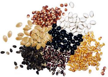 Seeds Per 30g 30 credits