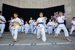 International Karate Organization Kyokushinkaikan.jpg