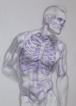 Anatomy for Figure Drawing — Lacey Lewis