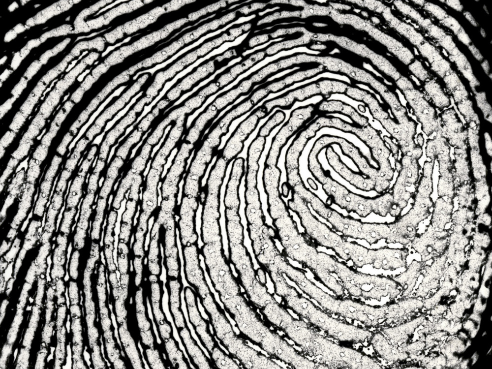 Fingerprint Series