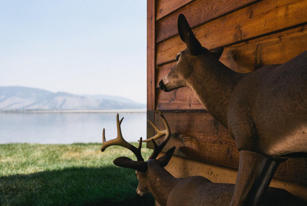 Idaho, 2016