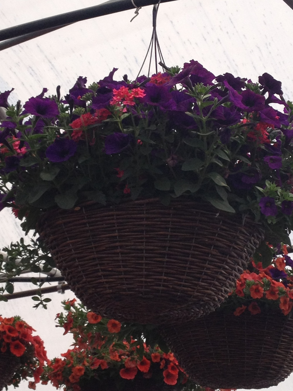 "16"" Sun Combination Grapevine Basket"