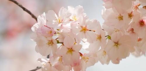 spring cleanse.jpg