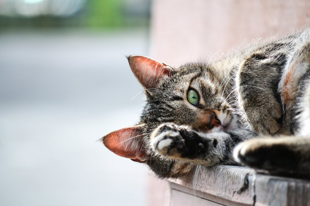 Photo by  Andrea Natali  on  Unsplash  A CAT BECAUSE THIS IS A DOUCHEY POST.