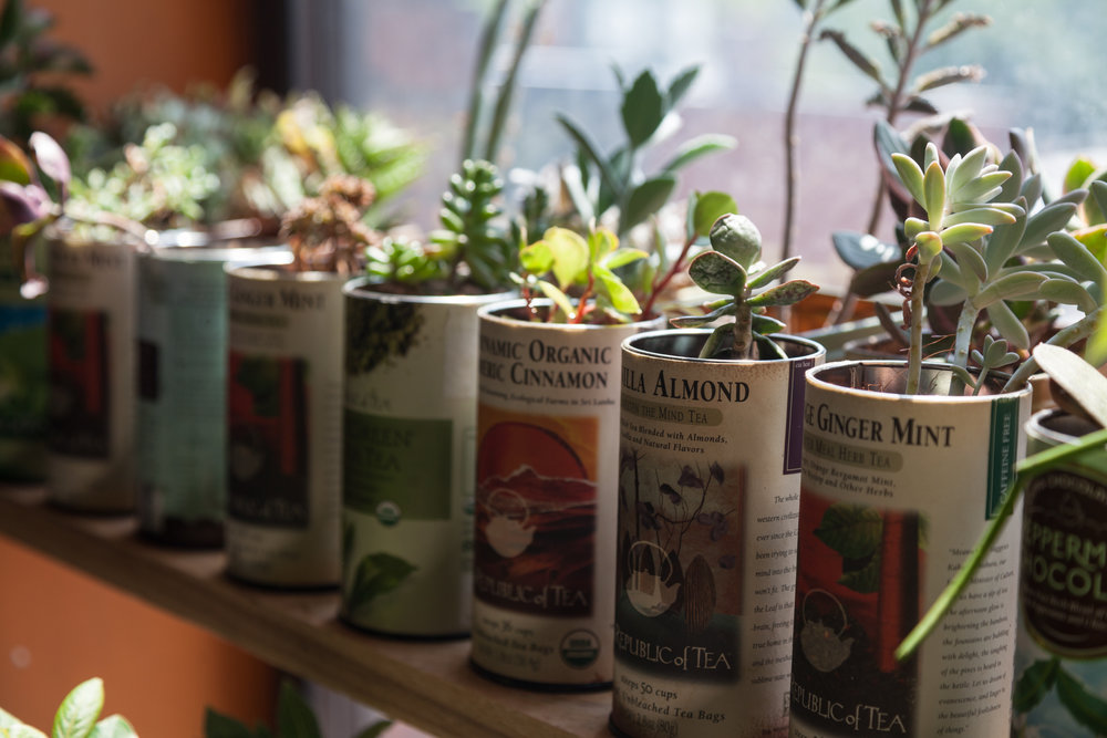 These upcycled tea canister containers are a good reminder to get some plants and drink your tea.