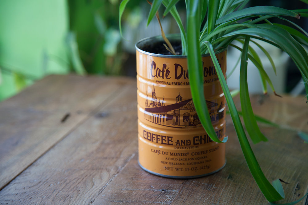 Spider plant in an upcycled coffee canister.
