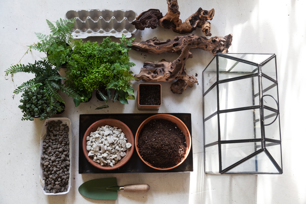 Terrariums can be as simple or as elaborate as you would like, provided that you have some basic elements—namely stones and charcoal to help create a drainage medium—and of course a terrarium!