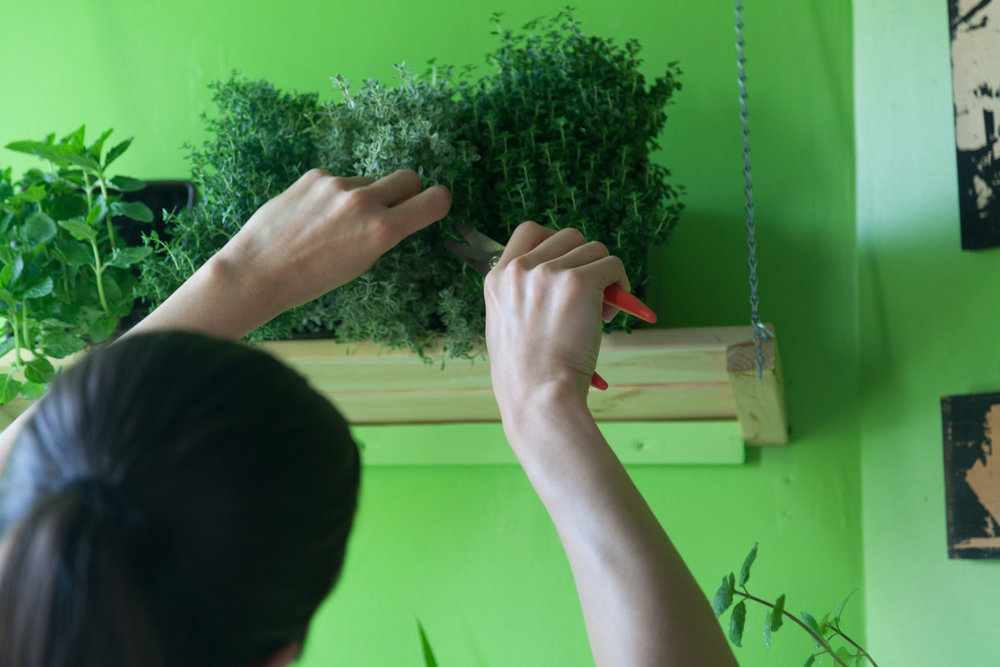 "The ""drawbridge"" can be tightened, lifting up the shelf, so that the herbs can lay at an angle on their side, without any water spilling out."