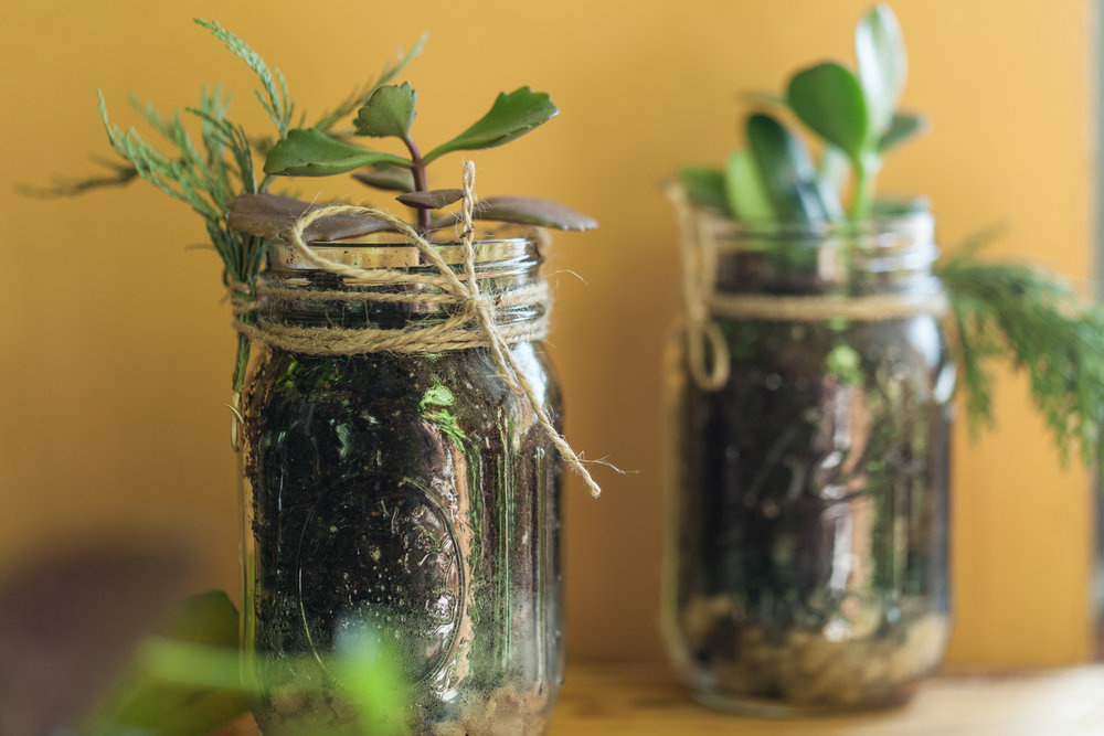 "Mason jar succulent gardens require very little care, which means that they are a perfect gift for those who claim to have a ""black thumb""."