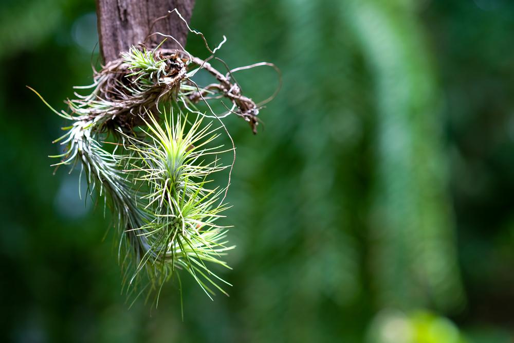 tillandsia-air-plants.jpg