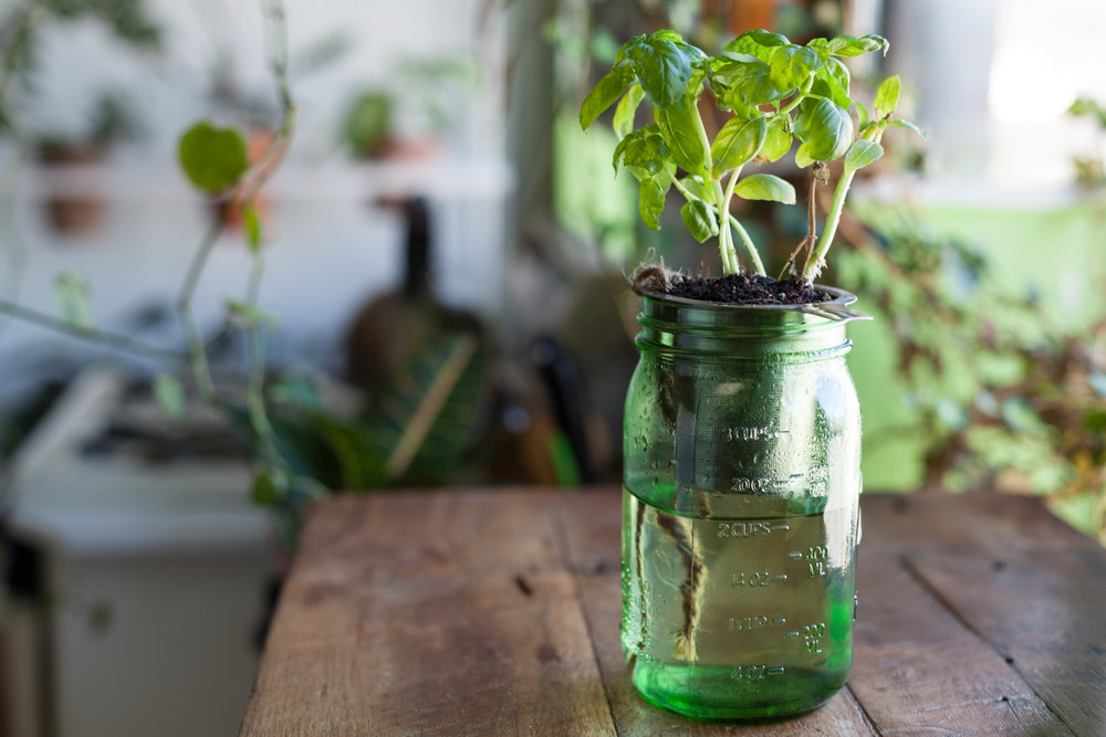 This is one of my earlier creations—a DIY self-watering Mason jar, just using twine and a tea strainer! Simple, ingenious and super affordable.