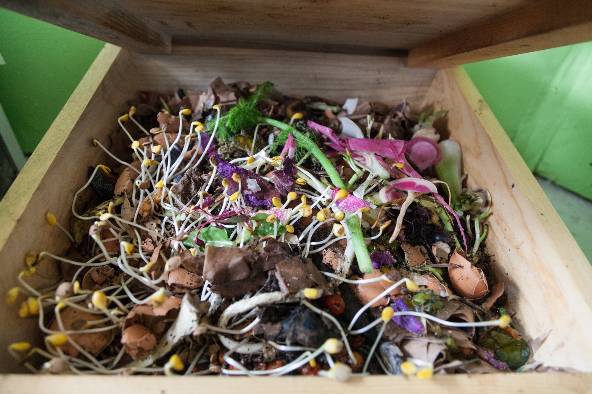 How to make worms compost faster