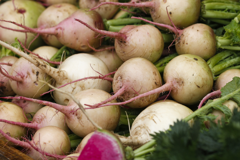 Watermelon radishes can brighten up any dish with their fuschia hue.