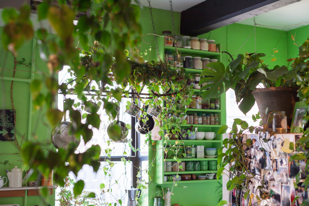 Through the green towards the window, you'll be able to see a flexible flyer plant shelf, which has become overgrown with philodendrons and ivy.