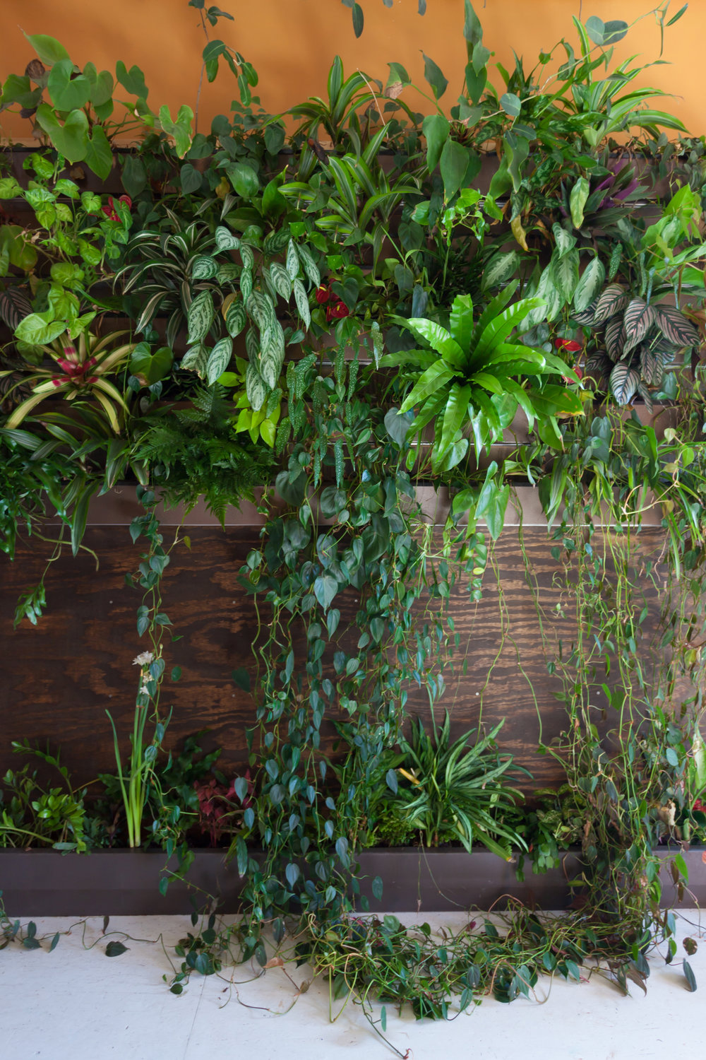 6 Ways To Increase Humidity For Houseplants Homestead Brooklyn