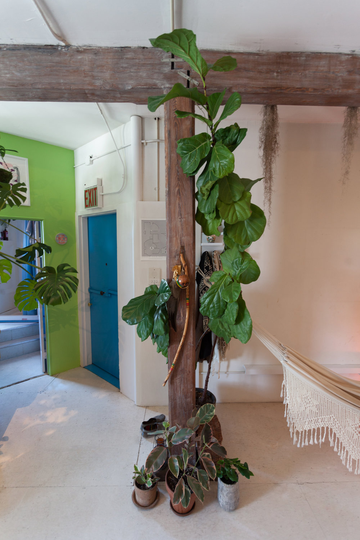 ficus-lyrata-summer-rayne-oakes-apartment.jpg
