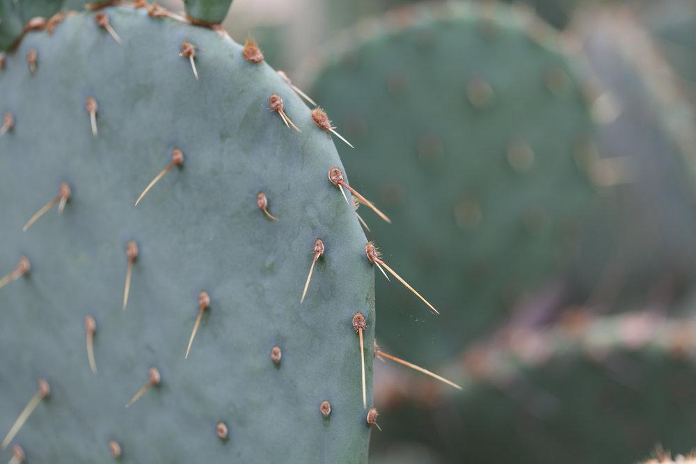 cacti-nybg.jpg