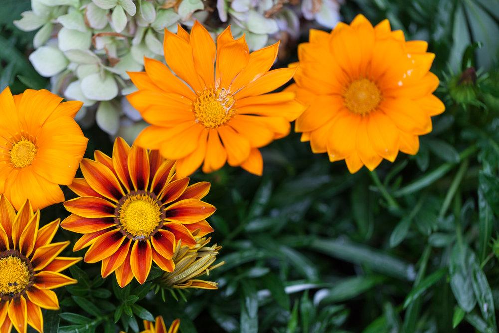 nybg-flowers.jpg