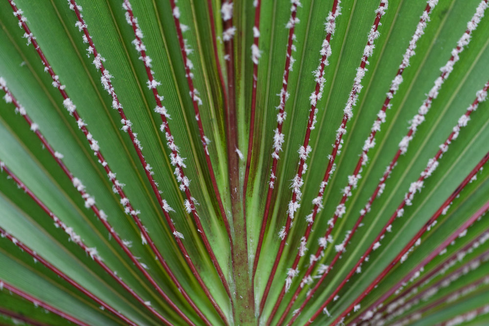 palm-fronds-nybg.jpg