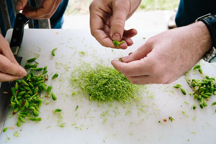 Foraged spruce tips. Photo by: Yossy Arefi