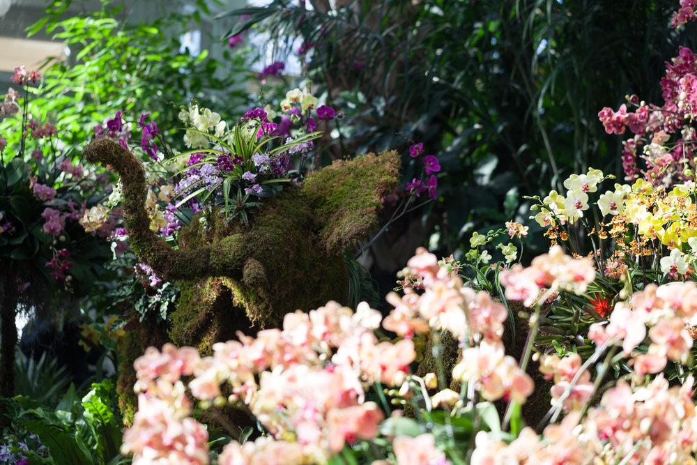 orchids-elephant-nybg.jpg