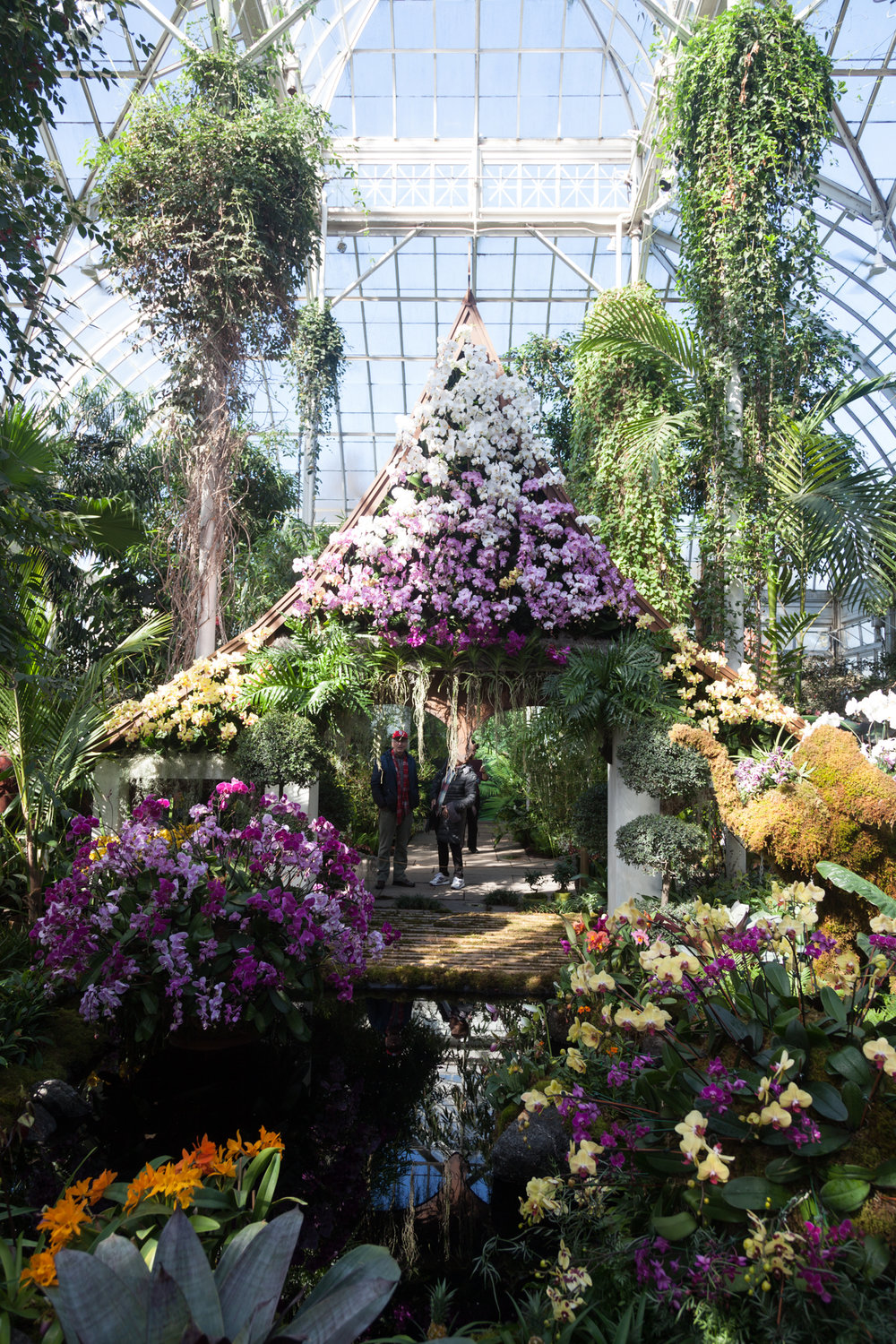 orchid-show-nybg.jpg