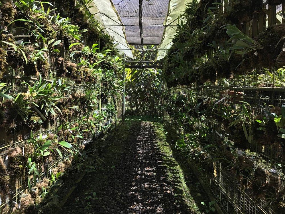Orchid-Garden-Lankester-Botanical-Costa-Rica.jpg