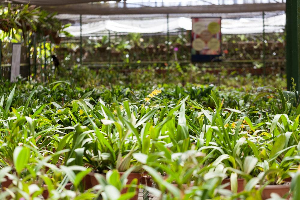 orchids-Lankester-botanical-garden-Costa-Rica.jpg