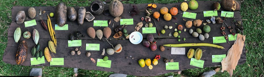 Some of the myriad of Costa Rican fruits found on the CATIE grounds. Turrialba, Costa Rica.